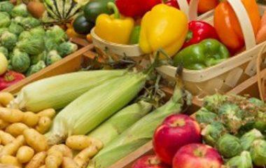 טיפול תזונתי במחלות